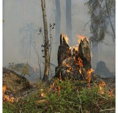 Prevención y tratamiento de incendios forestales.