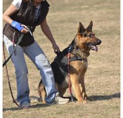 Curso de Técnicas de Adiestramiento Canino Aplicadas a la Búsqueda de Restos Humanos
