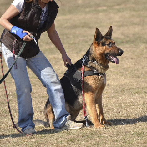 Técnicas de adiestramiento canino aplicadas a la búsqueda de restos humanos