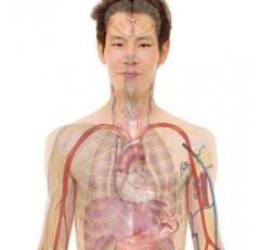 Curso de Anatomía Humana