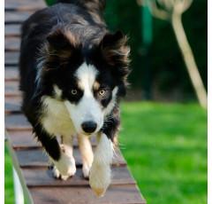 Curso de Comportamiento Canino