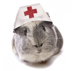 Curso de Urgencias para el clínico de pequeños animales
