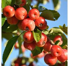 Curso de Cultivo de las Plantaciones Frutales