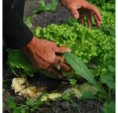 Curso de Ecología para la Agricultura