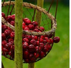Curso de Fruticultura