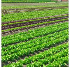 Curso de Nutrición de Cultivos