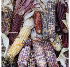 Curso de Transgénicos en Agricultura