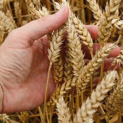 Curso de Recolección de Cultivos Herbáceos