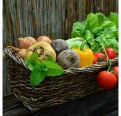 Curso de Recolección, Almacenamiento y Transporte de Flores y Hortalizas