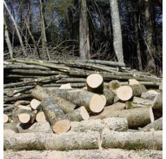 Curso de Mantenimiento de Cosechadoras Forestales