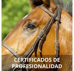 Curso de Operaciones Auxiliares de Guarnicionería certificado