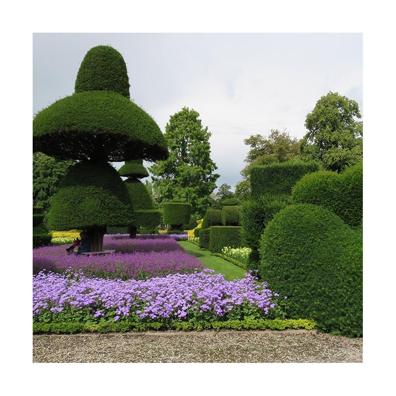 curso de poda de rboles y arbustos ornamentales cursos