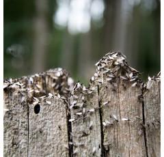 Curso de Experto en Sanidad Forestal