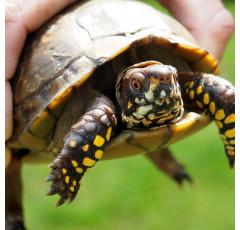 Curso de Auxiliar de Veterinaria Especializado en Reptiles y Anfibios