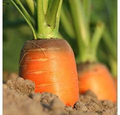 Curso de Agricultura Doméstica