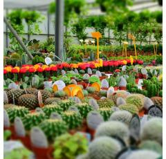 Curso de Operaciones Básicas en Viveros y Centros de Jardinería