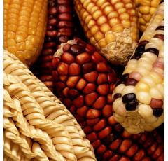 Curso de Introducción a la Mejora Genética Vegetal