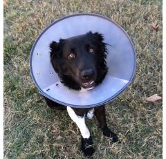 Curso de Medicina Canina