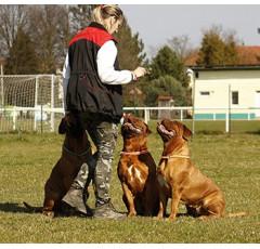 Curso de Psicología Canina