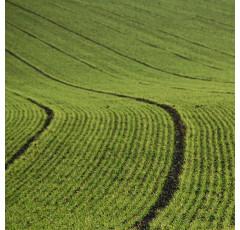 Curso de Implantación de Cultivos en Agricultura Convencional y Ecológica