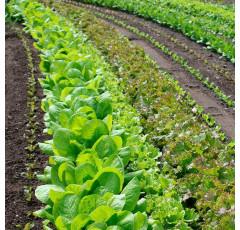 Curso de Preparación del Terreno para la Instalación de Infraestructuras, Siembra y Plantación de Cultivos Herbáceos