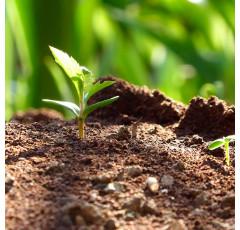 Curso de Gestión y Evaluación Medioambiental (ISO 14001:2015)
