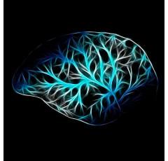 Curso de Estimulación Magnética Transcraneal y Neuromodulación