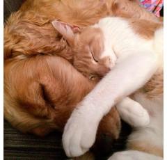 Curso de Peluquería Canina y Felina