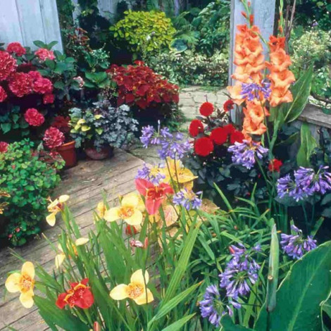 Curso de Cuidado de las Plantas. Plantas de Jardín