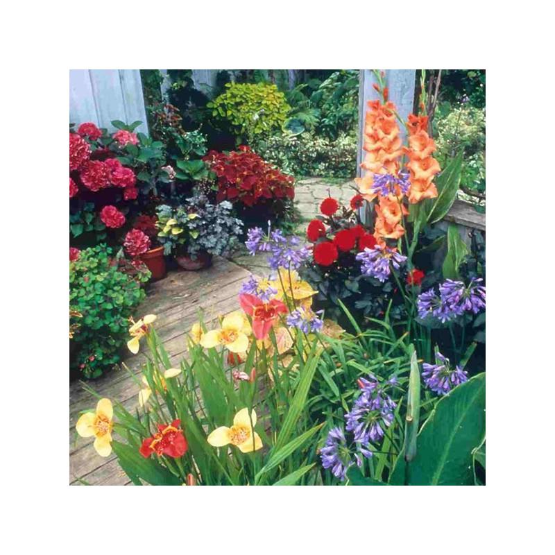 Curso de cuidado de las plantas plantas de jard n cursos - Plantas para el jardin ...