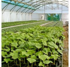 Curso de el Suelo de Cultivo y las Condiciones Climáticas (Horticultura y Floricultura)